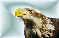 Eaglemet