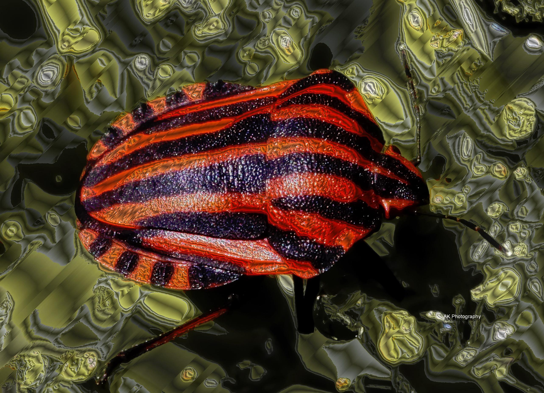 Beetle3met