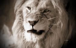 Kinglion1
