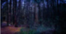 luciernaga-gay-travel-lgbt-luces-bosque-