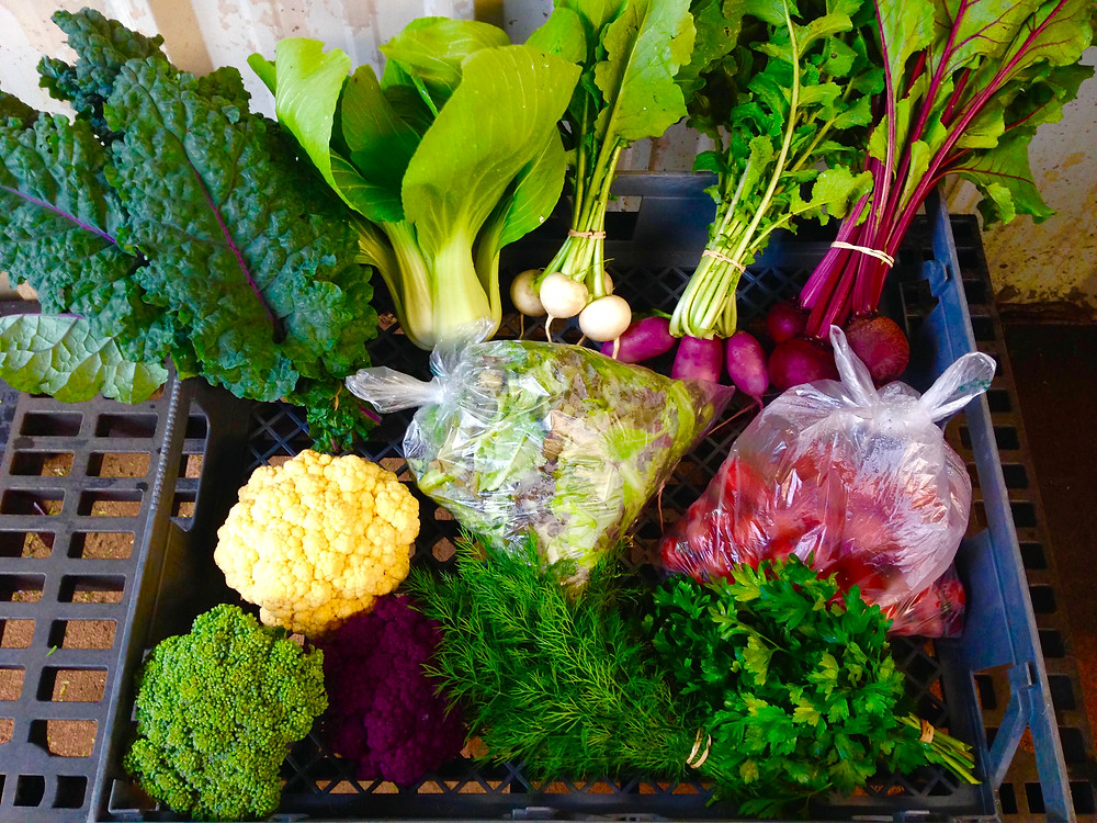 Examples of Organic Produce