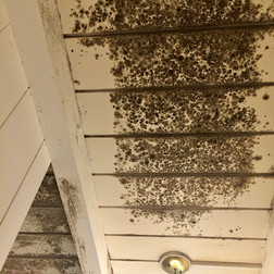 Common Mold Myths Busted!