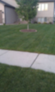 Weed control helps this lawn to be healthy and attractive