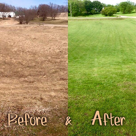 Before and After Overseeding Grass