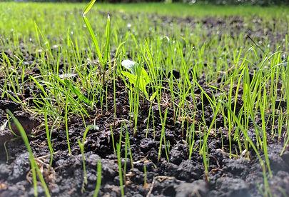Lawn establishment by slit seeding