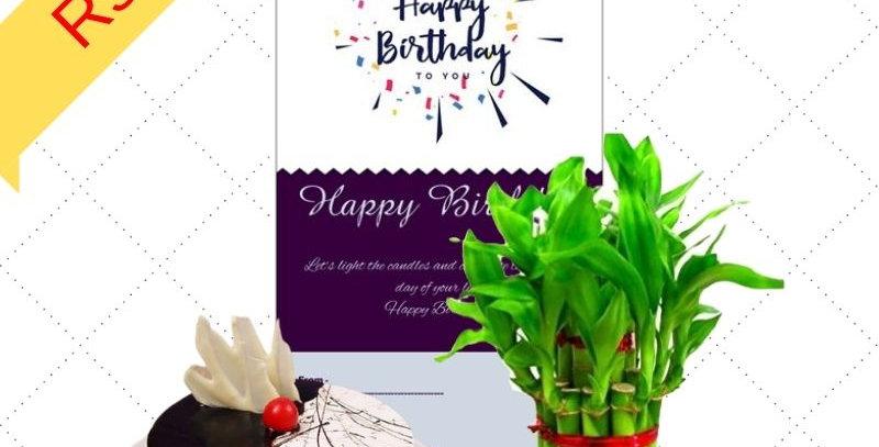 Gift Combo Cake & Plant