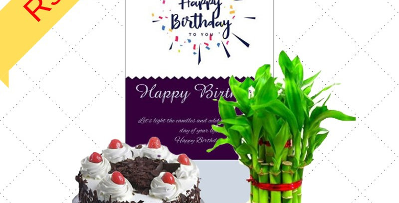 Cake/Lucky Plant/Greeting Card Combo