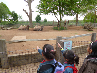 Y2 Went to the Zoo