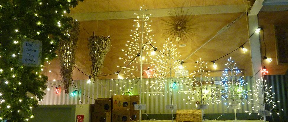 2d Lighted Trees Christmas 2018.JPG