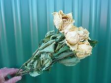 Rose Parchment.JPG