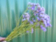 Statice Lavender 2020.JPG