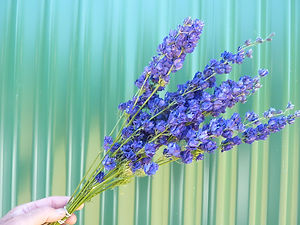 Larkspur Blue RT 2021.JPG