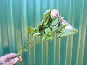 Rose Mauve.JPG