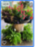 plantpicsforwebsite2.png