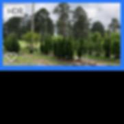 plantpicsforwebsite9.png