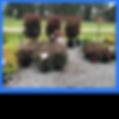 plantpicsforwebsite7.png
