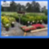 plantpicsforwebsite5.png