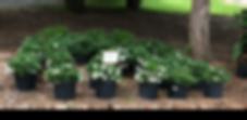 plantpicsforwebsite11.png