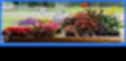 plantpicsforwebsite.png