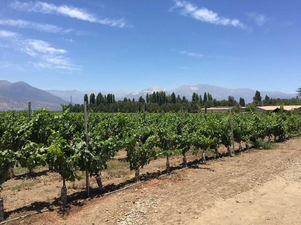 Chile's Maipo Valley