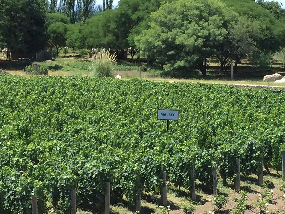 Mendoza wine experience