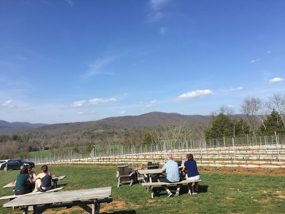 Picnic at a winery