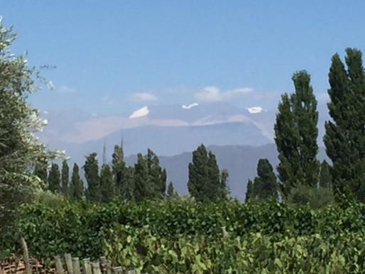 Exploring the Wine of Luján de Cuyo