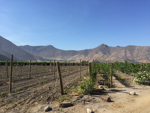 Discovering the Wine of Chile's Aconcagua Valley