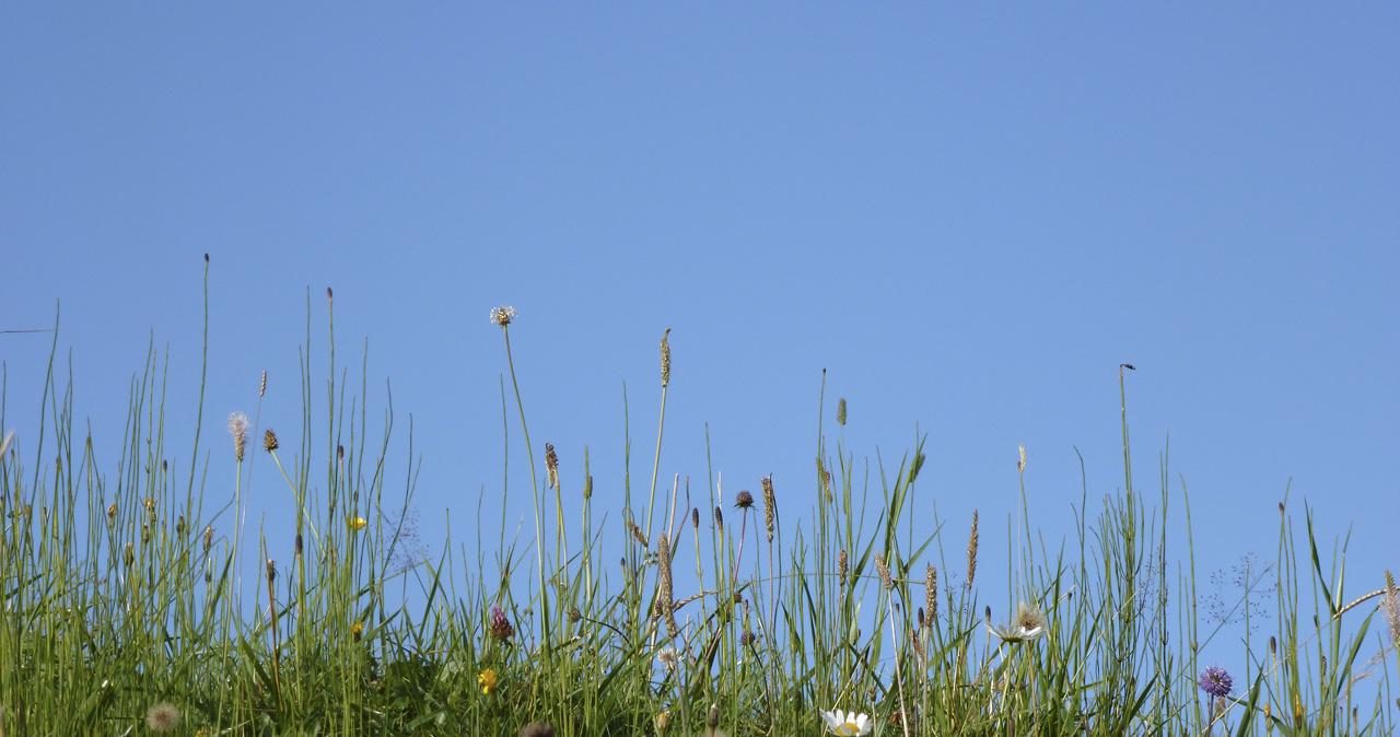 Du champ de fleur au chant bleu