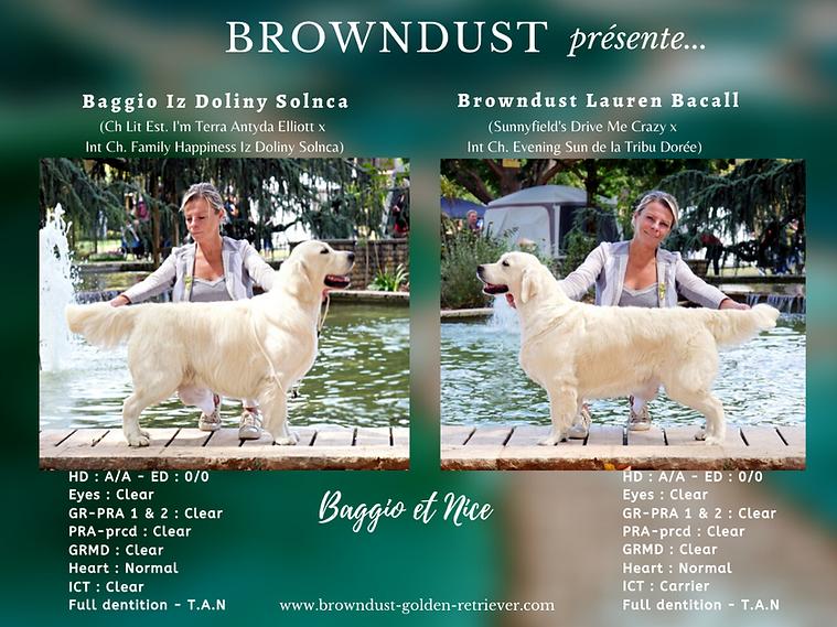 Browndust présente...-NET.png