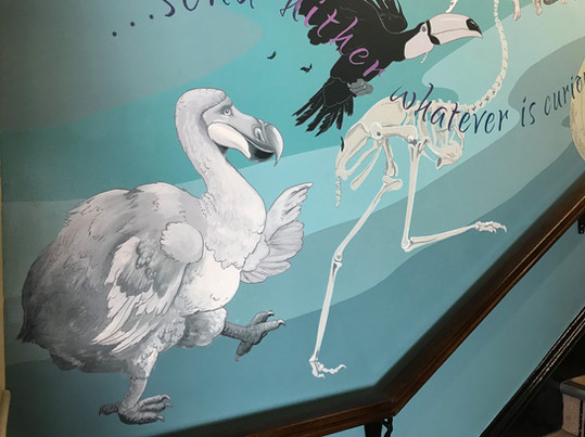 Dodo, rhea skeleton and toucan