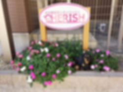 富山 ドッグサロン トリミングサロン 犬の美容室チェリッシュ ペットホテル