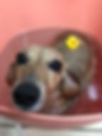 富山 ドッグサロン トリミングサロン 犬の美容室チェリッシュ 炭酸泉