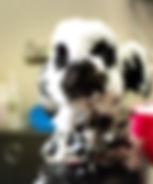 富山 ドッグサロン トリミングサロン 犬の美容室チェリッシュ