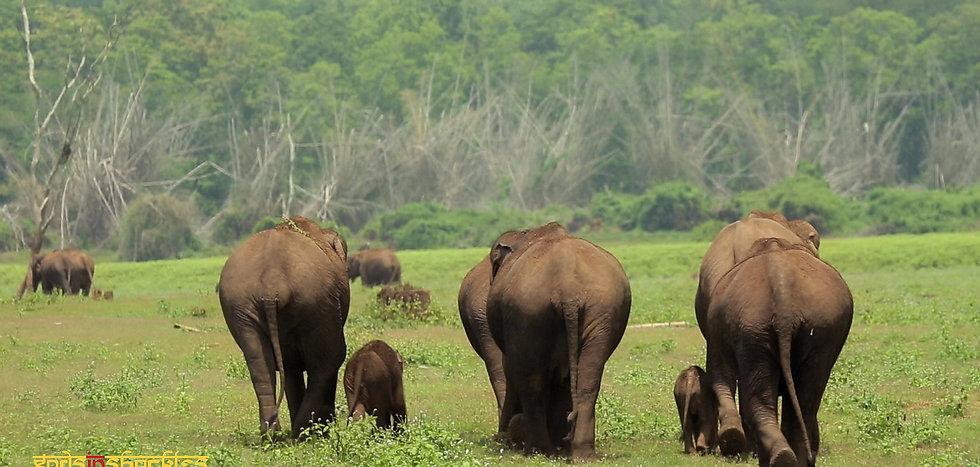 ElephantBum2_GIS_Logo (1).jpg
