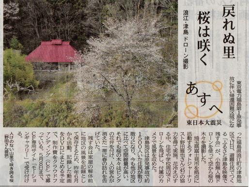 「戻れぬ里 桜は咲く」津島の桜をドローンで撮影(河北新報)