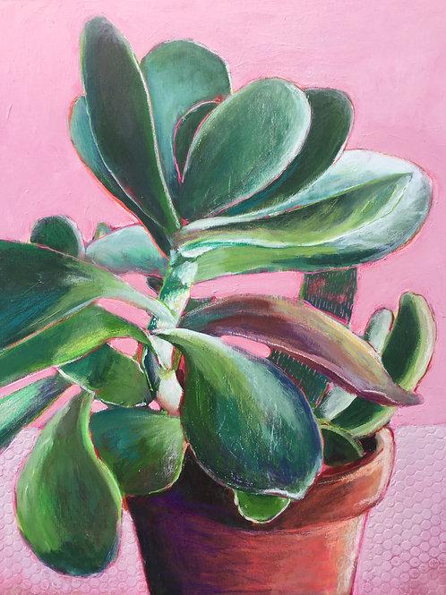Succulente au mur rose