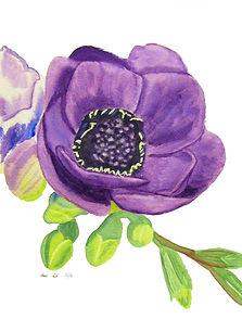 Purple Anemones.jpg