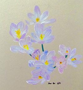 Crocus Spring flowers.jpg