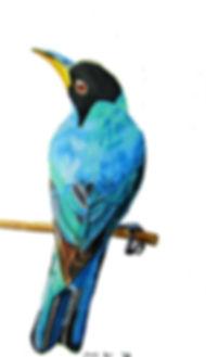 Green Honey creeper bird.jpg