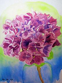Hydrangeas in a vase
