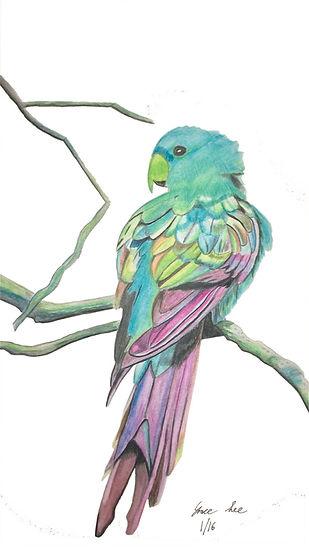 Tropical Parrot.jpg