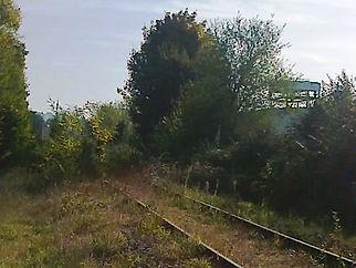 Photo de voie ferrée enfouie sous la végétation.