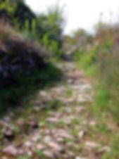 Vieux chemin empierré envahi par la végétation.