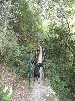 Photo montrant un chien qui s'engage sur une étroite passerelle dans les gorges de San Jaume.