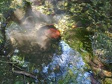 Photo montrant une pierre couverte d'algues rouges dans le ruisseau de San Jaume.