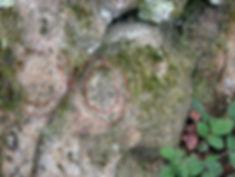 Les énigmes de Morenci, signes gravés semblables à ceux de la croix, vue élargie et identification.