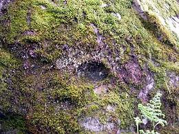 Les énigmes de Morenci, cupule dans un rocher.