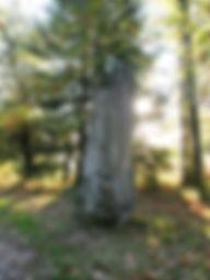 Beau menhir du Pic dans la forêt, vue de face.