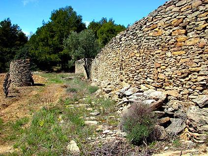 Très grand mur de lauzes, s'étirant le long des vignes.